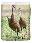 Sweet Sandhill Crane Family Duvet Cover