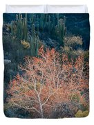 Sycamore And Saguaro Cacti, Arizona Duvet Cover