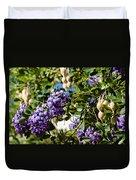 Texas Mountain Laurel Sophora Flowers And Mescal Beans Duvet Cover