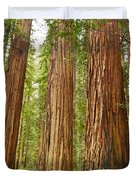 The Beautiful And Massive Giant Redwoods Sequoia Sempervirens In Redwood National Park. Duvet Cover by Jamie Pham