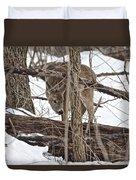 The Doe And The Snow - Odocoileus Virginianus Duvet Cover