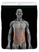 The External Oblique Muscles Duvet Cover