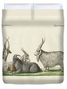 The Kashmir Goats Introduced In France Duvet Cover
