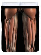 The Muscles Of The Upper Legs Rear Duvet Cover