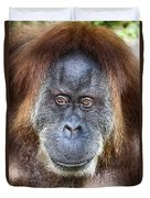 The Orangutan Album V4 Duvet Cover
