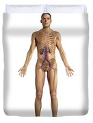 The Renal System Male Duvet Cover