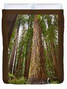 The Survivor - Massive Redwoods Sequoia Sempervirens In Redwoods National Park Named Stout Tree. Duvet Cover