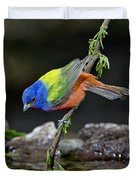 Thirsty Painted Bunting Duvet Cover
