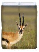 Thomsons Gazelle Duvet Cover