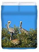 Three Brown Pelicans Duvet Cover