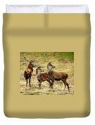 Wildlife Three Red Deer Duvet Cover