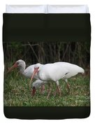 Three Ibis Together Duvet Cover