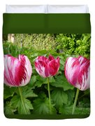 Three Pink Rembrandt Tulips Duvet Cover