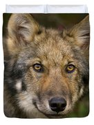 Timber Wolf In Denali Duvet Cover