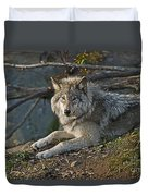 Timber Wolf Pictures 1148 Duvet Cover