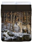 Timber Wolf Pictures 1206 Duvet Cover