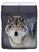 Timber Wolf Pictures 1271 Duvet Cover