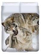 Timber Wolf Pictures 1314 Duvet Cover