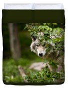Timber Wolf Pictures 1328 Duvet Cover