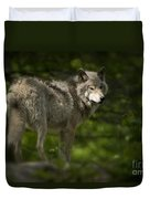 Timber Wolf Pictures 1336 Duvet Cover