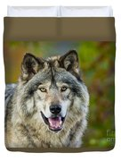 Timber Wolf Pictures 1388 Duvet Cover