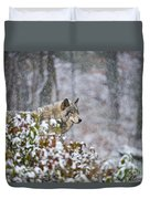 Timber Wolf Pictures 1395 Duvet Cover