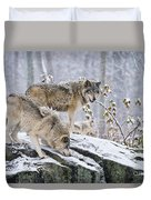 Timber Wolf Pictures 1420 Duvet Cover