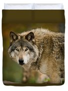 Timber Wolf Pictures 1629 Duvet Cover