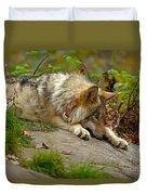 Timber Wolf Pictures 1646 Duvet Cover