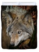 Timber Wolf Pictures 1660 Duvet Cover