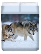 Timber Wolf Pictures 190 Duvet Cover