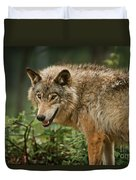 Timber Wolf Pictures 262 Duvet Cover