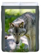 Timber Wolf Pictures 294 Duvet Cover