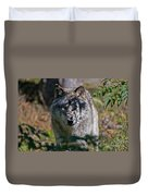 Timber Wolf Pictures 405 Duvet Cover