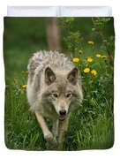 Timber Wolf Pictures 59 Duvet Cover