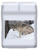 Timber Wolf Pictures 683 Duvet Cover