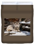 Timber Wolf Pictures 776 Duvet Cover