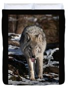 Timber Wolf Pictures 954 Duvet Cover