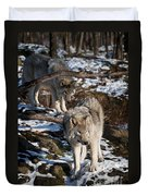 Timber Wolf Pictures 957 Duvet Cover by World Wildlife Photography