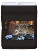 Timber Wolf Pictures 991 Duvet Cover