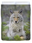 Tk0607, Thomas Kitchin Coyote In Spring Duvet Cover