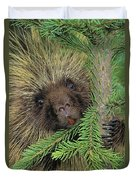 T.kitchin 14107c, Porcupine In Spruce Duvet Cover