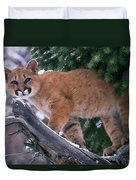 T.kitchin 15274d, Cougar Kitten Duvet Cover