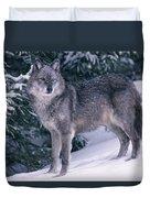 T.kitchin, 19821c Gray Wolf, Winter Duvet Cover