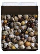 Topshells Whelk And Periwinkle Shells Duvet Cover