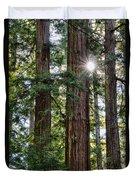 Towering Redwoods Duvet Cover