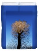 Tree In Afternoon Sunlight Duvet Cover