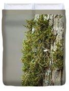 Tree Moss Closeup 2013 Duvet Cover