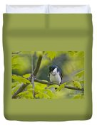 Tree Swallow Pictures 39 Duvet Cover