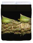 Treehoppers And Nymphs Mindo Ecuador Duvet Cover